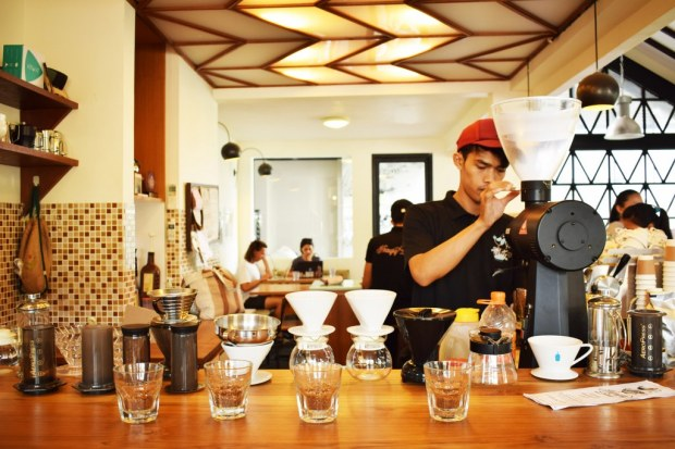 Preparation of coffees for cup tasting